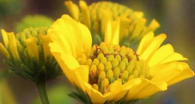 Kitchen Mark Rogan - Yellow Desert Flower by Life Inspired Art and Decor