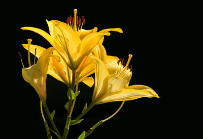 Photograph - Yellow by Don Durfee