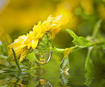 Yellow Drop Art Print by Trudy Wilkerson