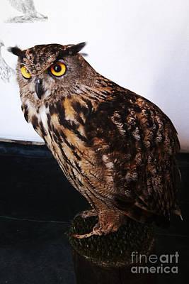 Yellow-eyed Owl Side Art Print