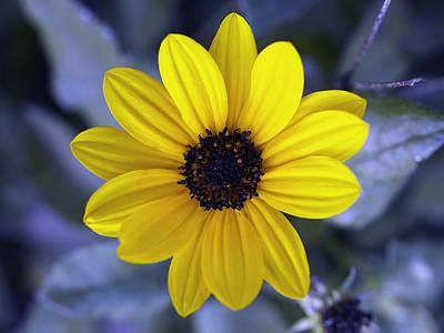 Tickseed Photograph - Yellow Flower 4 by Skip Nall
