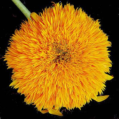 Art Print featuring the photograph Yellow Flower by Elvira Ladocki