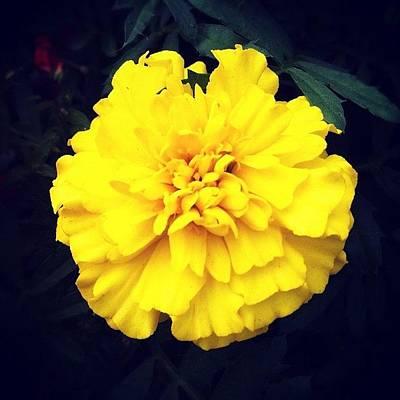 Naturediversity Photograph - #yellow #flower by Jason Fang