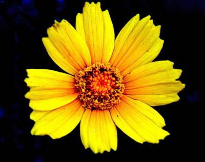 Yellow Flower Print by Marty Koch