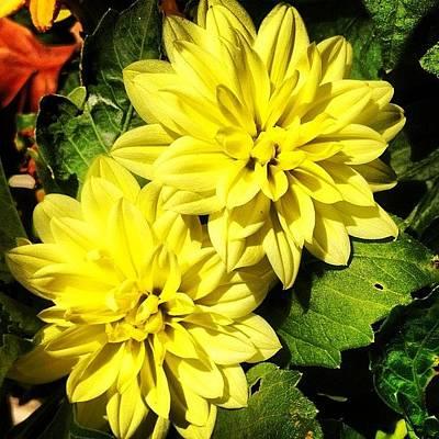 #yellow #flower #petals #closeup Art Print