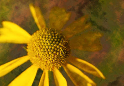 Photograph - Yellow Flower by Ricky Barnard