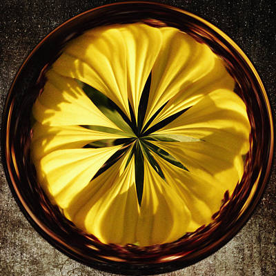 Tickseed Photograph - Yellow Flower by Skip Nall