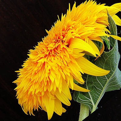 Art Print featuring the photograph Yellow Flowers by Elvira Ladocki