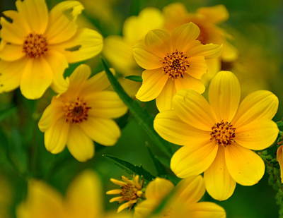 Yellow Flowers Print by Marty Koch