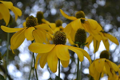 Photograph - Yellow Flowers by Naomi Berhane