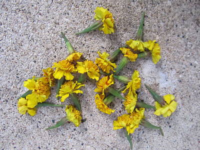 Photograph - Yellow Flowers On Cement by Todd Sherlock