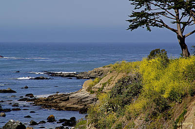 Photograph - Yellow Flowers On The Central California Coast by Mick Anderson