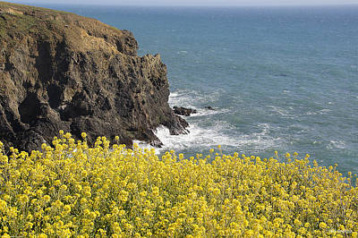 Photograph - Yellow Flowers On The Northern California Coast by Mick Anderson