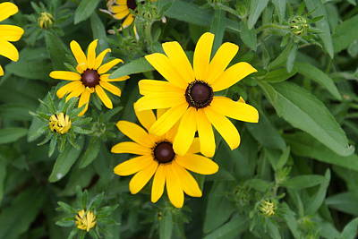Photograph - Yellow Flowers by Ron Read