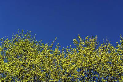 Warsaw Photograph - Yellow Flowers Tree by Daniel Kulinski
