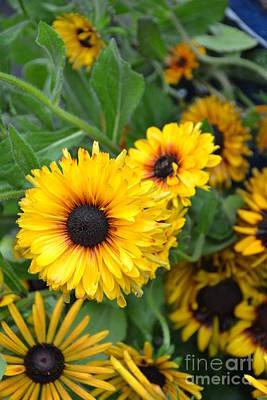 Photograph - Yellow Garden by Bonnie Myszka