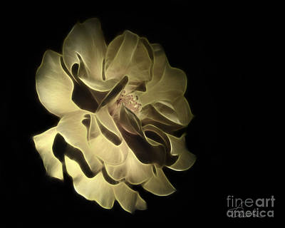 Photograph - Yellow Glory by Danuta Bennett