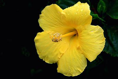 Photograph - Yellow Hibiscus by Ira Runyan