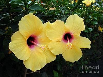 Yellow Hibiscus Original by John Chatterley