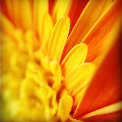 Daisies Photograph - Yellow Hope Of Days To Come by Christopher Campbell