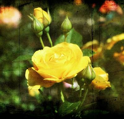 Yellow Rosebud Photograph - Yellow In The Garden by Cathie Tyler
