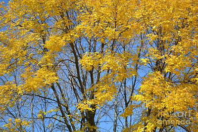 Photograph - Yellow In The Tree by Justine Gersich