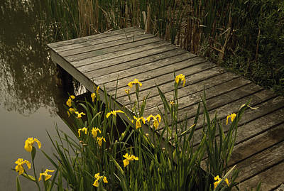 Berea Wall Art - Photograph - Yellow Irises Blooming By A Small Deck by Raymond Gehman