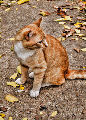 Photograph - Yellow Kitty by Debbie Portwood