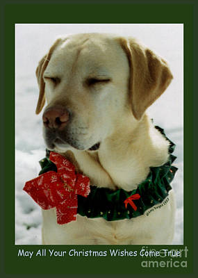 Photograph - Yellow Lab Christmas Dreams by Amy Reges