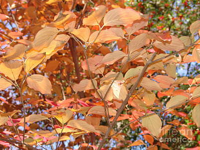 Photograph - Yellow Leaves 2 by Rod Ismay