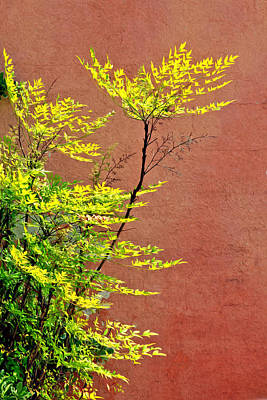 Photograph - Yellow Leaves Red Wall by James Steele