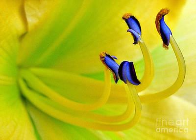 Yellow Lily Art Print by Judi Bagwell