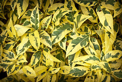 Photograph - Yellow Mess by Denis Lemay