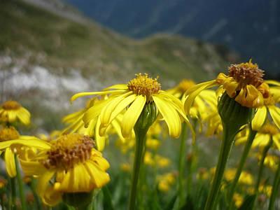 Yellow Mountain Flowers Art Print by Martin Marinov
