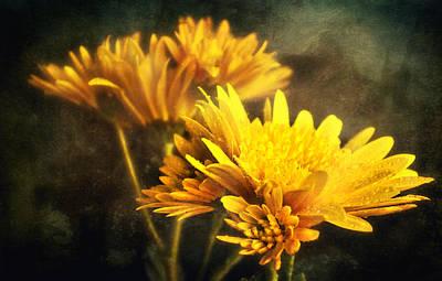 Shower Digital Art - Yellow Mums by Svetlana Sewell