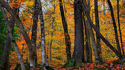 Photograph - Yellow by Nancie DeMellia
