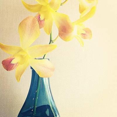 Orchids Photograph - #yellow #orchid #blue #vase #aqua by Rachel Boyer