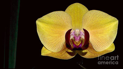 Photograph - Yellow Orchid by Mareko Marciniak