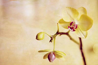Travel Rights Managed Images - Yellow Orchid Royalty-Free Image by Rebecca Cozart