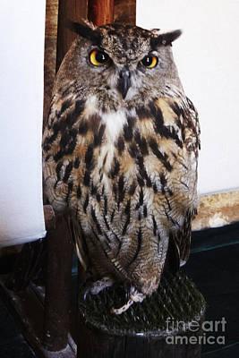 Yellow Owl Eyes Art Print