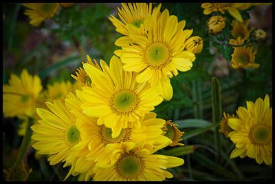 Flowers Photograph - Yellow Petals by Kelly Rader
