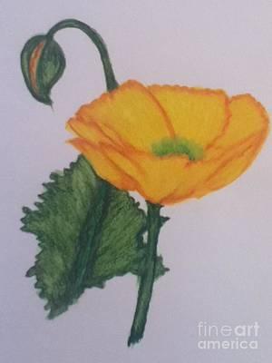 Yellow Poppy Art Print by Berta Barocio-Sullivan