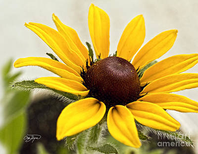 Photograph - Yellow Punch- Artist Cris Hayes by Cris Hayes