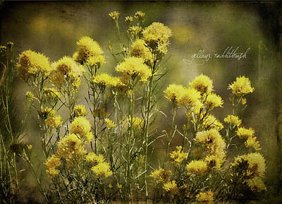 Photograph - Yellow Rabbitbrush by Lana Trussell