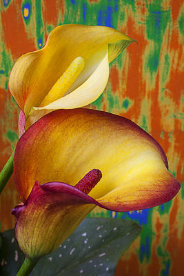 Yellow Red Calla Lilies  Art Print by Garry Gay