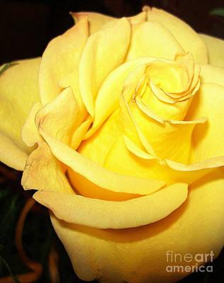 Photograph - Yellow Rose For Friendship.. by Jolanta Anna Karolska