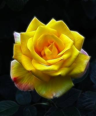 Yellow Rose In The Moonlight Art Print by Georgiana Romanovna