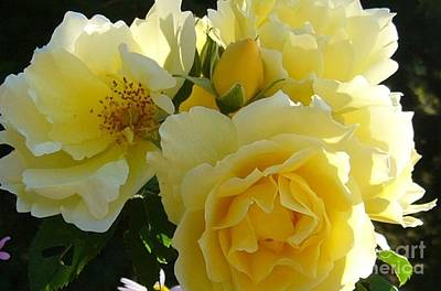 Art Print featuring the photograph Yellow Rose by Jim Sauchyn