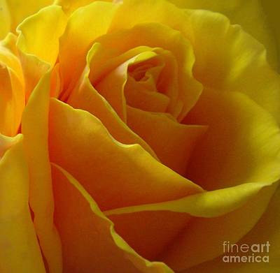 Yellow Rose Of Texas Art Print by Sandra Phryce-Jones