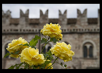 Photograph - Yellow Roses  Card by Raffaella Lunelli